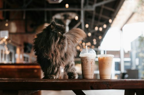 can cats drink coffee